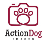 Action Dog Images